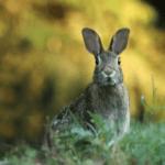 RabbitVCS bringt Git Icon Overlays in Ubuntus  Dateimanager Nautilus.