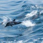KDE Dolphin - Git Icon Overlays fehlen